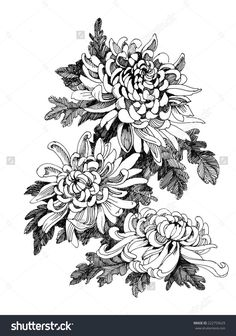 Hand drawing chrysanthemum flower vector illustration | Line Pictures ...