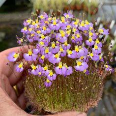 Bog Garden, Garden Plants, Indoor Plants, House Plants, Garden Gates, Wisteria Garden, Fruit Garden, Unusual Flowers, Rare Flowers