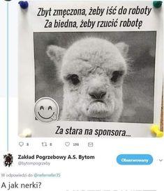 Polish Memes, Isco, Gaming, Humor, Random, Beautiful, Videogames, Humour, Funny Photos
