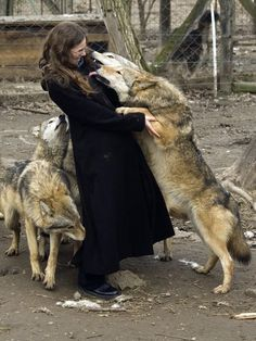 kiss of the wolf by szorny-stock.deviantart.com on @deviantART