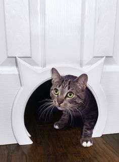 Contain the potentially unpleasant odor of your cat's litter box without restricting her access to it using The Kitty Pass Interior Cat Door. No one wants their feline friend's litter box on display in an open room, and now you don't have to with this cute and creative cat door. For cat-and-dog households, it's also a perfect solution to keep your curious pup out of the litter and away from your cat's food. Simply cut a hole in the bottom of the door using the provided template, attach the…