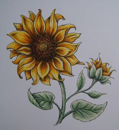 Drawing Tips sunflower drawing Sunflower Colors, Sunflower Art, Sunflower Design, Sunflower Tattoos, Sunflower Paintings, Sunflower Sketches, Sunflower Drawing, Sunflower Illustration, Pencil Art Drawings