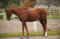L'enrênement - Un cheval avec un enrênement nathe