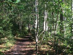 Silmä ja sielu lepäävät Suolijärven maisemissa. Country Roads
