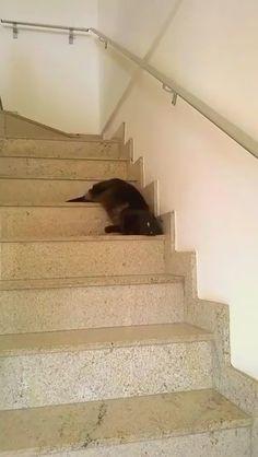 ネコって…こんな生き物だっけ? pic.twitter.com/QPYa5jnwJh