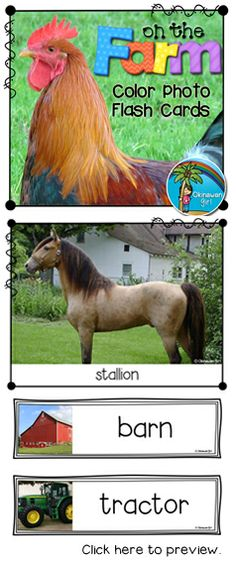 "Use for wall displays, vocabulary development activities, writing prompts or as a stimulus for discussions such as, ""What do you know about....? / What have you learned about....?"" Flash cards feature full family sets e.g. ""stallion"", ""mare"" and ""foal"". $"