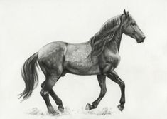 horse drawing - this would be a pretty tattoo :)