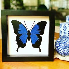 This Gorgeous butterfly with its brilliant electric blue wings trimmed in black is called The Ulysses butterfly one o. Paper Art, Paper Crafts, Diy Crafts, Paper Butterflies, Butterfly, Blue Wings, Electric Blue, Tropical, Frame
