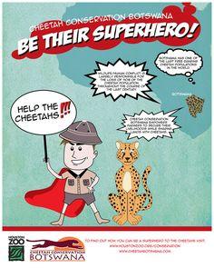 UHGAP & Houston Zoo, Cheetahs - Stephanie Torres