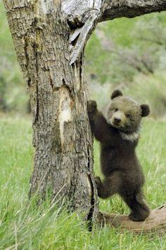 mom, I found the honey!