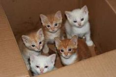 I gatti nei tubi della stufa