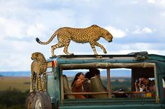 Winners of National Geographic's 2013 Traveler Photo Contest