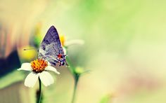 Pink Butterfly On Flower Wallpapers Mobile Animal Wallpaper Blue Butterfly Wallpaper, Butterfly Background, Flower Wallpaper, Butterfly On Flower, Butterfly Photos, Most Beautiful Butterfly, High Resolution Wallpapers, Photo Wallpaper, Hd Wallpaper