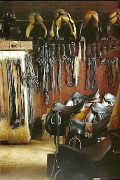 This is a horse lovers dream