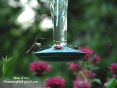Hummingbird Nectar Recipe. How To Make Homemade Hummingbird Food.