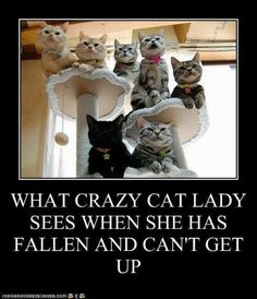 Cat lady problems