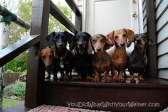 A six pack of wieners. Madness.