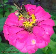 Bunga berpenghuni kupu-kupu