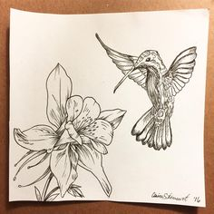 Quick drawing I did for a thank you card! #floral #sketch #linedrawing #hummingbird #ink #columbine #flower #bird #art