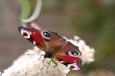 #butterflies 2012