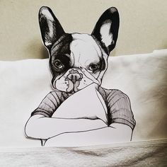 Frenchie , French Bulldog , Jeroen Teunen