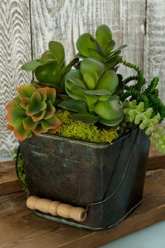 Succulents styled in a bucket