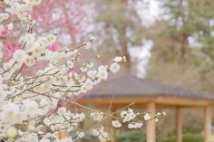 撮影スポット 〜京都府立植物園〜 #関西 #カメラ女子 #関西カメラ女子部 #京都 #植物園 #京都府立植物園 #Botanicalgarden #kyoto