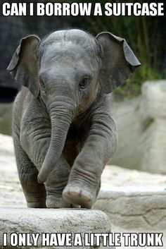 Baby elephant needs a favor.