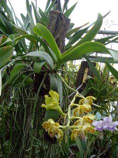 Lo gradiscono le nostre orchidee e noi coltivatori ci appassioniamo ancor di più. Gran parte delle tantissime specie d'orchidee conosciute sono epifite e/o litofite e quindi il loro ambiente di vit…