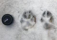 Känn igen spår av varg, björn och lo | Natursidan Guider, Nest Thermostat, Nature