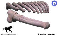 Realistic Horse Penis 3D Model .max .c4d .obj .3ds .fbx .lwo .stl @3DExport.com by Avencust @3