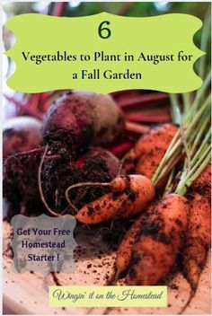 Planting vegetables in August for a fall garden is a great way to extend the harvest, spread out your food preservation, and enjoy different types of vegetables. Here is a list of 6 vegetables you can start growing in August. Different Types Of Vegetables, Types Of Herbs, Different Plants, Planting Vegetables, Growing Vegetables, Fruits And Vegetables, Vegetable Gardening, Gardening Tools, Flower Gardening