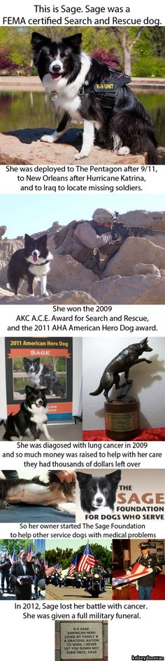 Hero. True testament of mans best friend and heart of gold. Love border collies