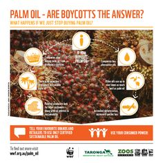 What happens if we just stop buying palm oil?
