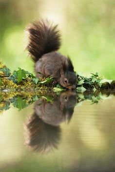 Eichhörnchen ❤