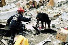 perros españoles de ayuda humanos - Buscar con Google