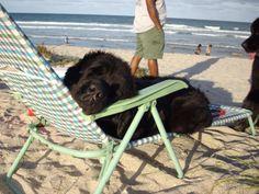 newfy sleeping at the beach