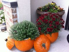 Place plants inside of pumpkins for fall decor.