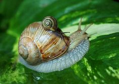 snail and baby