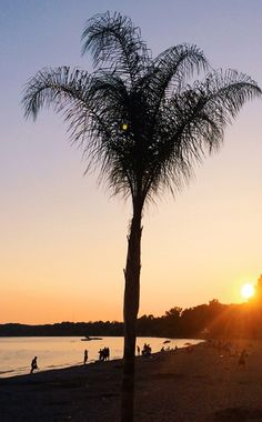 Your ultimate list of what to see & do in Norfolk County, Ontario. Palm Tree Sunset, Palm Trees, Ontario Place, Norfolk County, 100 Things To Do, Nova Scotia, Sunsets, Beaches, Stuff To Do
