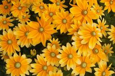 20% Rabatt als Poster: Blumen Garten Sommer  Download auf Webseite!  Kategorien: landschaften, blumen, garten, sommer