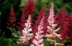 Blütenpflanzen im Juli - Jahreszeiten - Galerie - Community