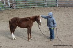Some basics of working with a yearling horse