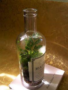 Terrarium in a wine bottle.