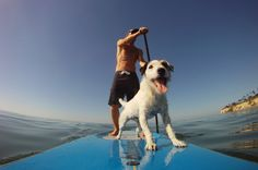 Stand up paddle board with dog | Stand-Up-Paddle-dogs.jpg
