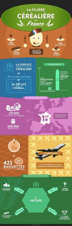La filière céréalière en france #cereals #france #agriculture #infography #infographie