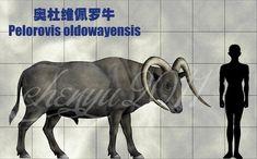 Pelorovis oldowayensis by sinammonite on DeviantArt