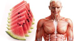 What Happens to Your Body when You Eat Watermelon Everyday – Benefits of Watermelon - YouTube