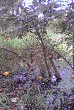 En la anterior fotografía, en plano general, se puede ver un humedal, con mucha basura y aguas negras, esto hace que cuando llueva muy fuerte, el humedal suba sus niveles de agua y muchas casas se ven afectadas en el barrio san jose, porque provoca inundaciones