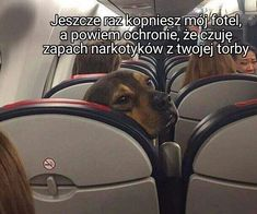 Guy Asks For Captions For Photo Of Dog On Airplane, Replies Are Hysterical – V… – Funny Photo İdeas Captions For Guys, Wtf Funny, Hilarious, Pet News, Photo Caption, Funny Photos, More Fun, Lol, Humor